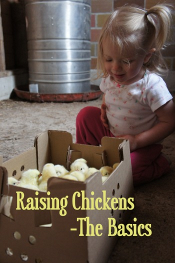 Raising Chickens The Basics